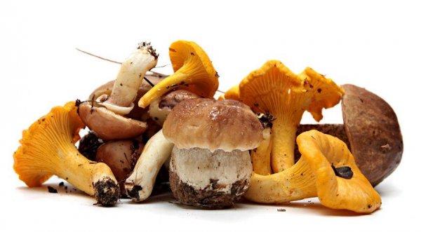 До скольки детям нельзя грибы